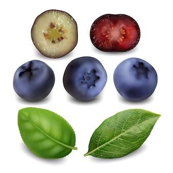 Heidelbeere und heidelbeere beeren lebensmittel-set. saftige blueberry bio fruit und grüne blätter.