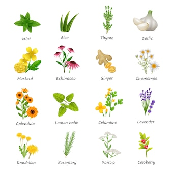 Heilende kräuter und heilpflanzen flache ikonen