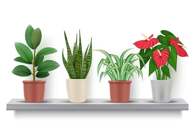 Heimische pflanzen. realistische blumen mit blättern in dekorativen vasenvektorillustrationen der töpfe. blühender blumentopf pflanzen, blume im regal
