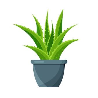 Helle aloe vera in einem blumentopf lokalisiert auf weißem hintergrund. grüne zimmerpflanze.