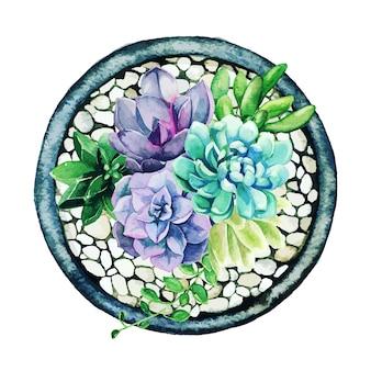 Helle aquarell-sukkulenten im topf, draufsicht, leichte kieselsteine
