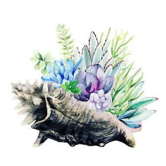 Helle aquarell-sukkulenten in der goliath-muschel, handgezeichnet