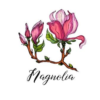 Helle blumenarrangements mit magnolienblüten