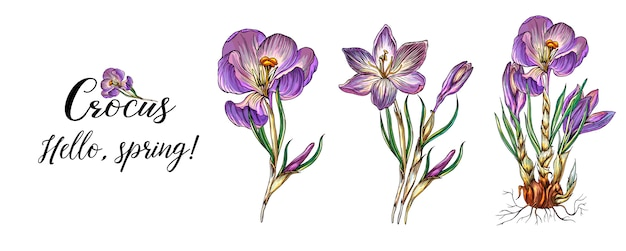 Helle farbige frühlingsblumenkollektion