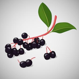 Helle saftige vogelkirsche oder hackberry