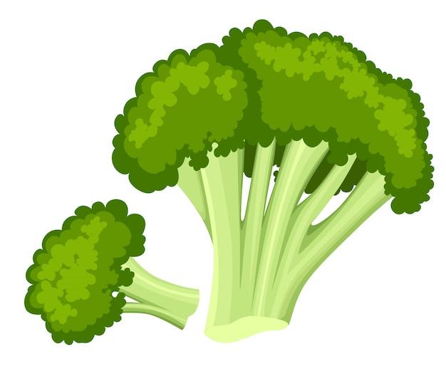 Helle sammlung von buntem brokkoli. unterschiedliches gemüse der frischen karikatur auf weißem hintergrund, das für deckblätter des menübuchplakatkartenmenüs verwendet wird. website-seite und mobile app.
