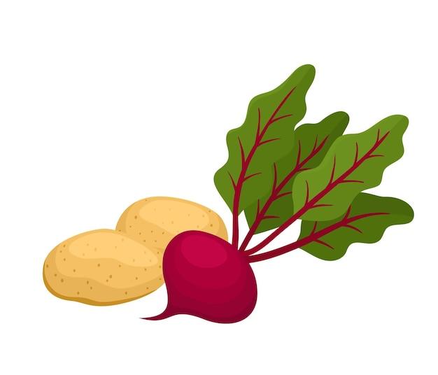 Helle vektorillustration von bunten kartoffeln und rote beete. bio-gemüse der karikatur isoliert auf weißem hintergrund für zeitschriften, bücher, poster, karten, menü-cover, webseiten.