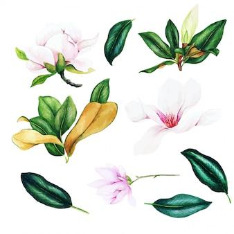 Hellrosa magnolienblüten und -blätter, aquarell-satz