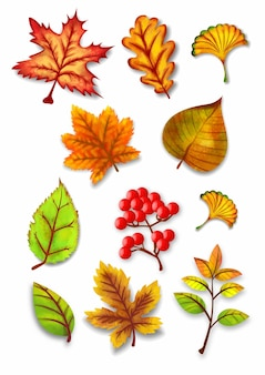 Herbst-aquarell-blätter-vektor-set-illustration
