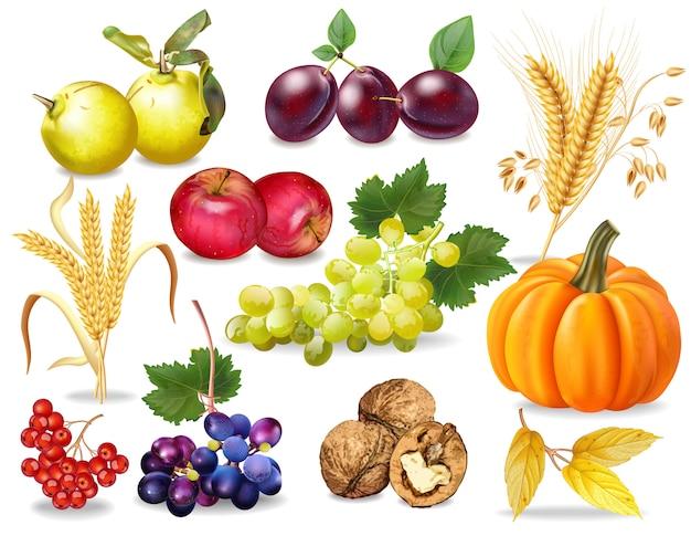 Herbst obst und gemüse sammlung