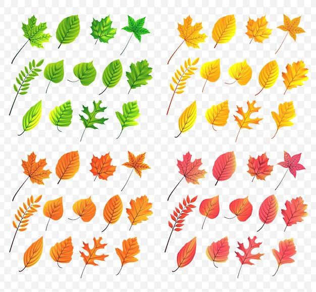 Herbst verlässt die sammlung