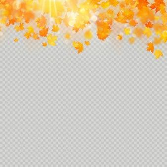 Herbstahornblätter mit zarter sonne zur dekoration. herbstblätter randvorlage.
