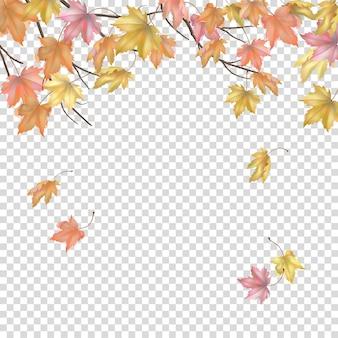 Herbstahornzweige und fliegende blätter auf einem transparenten hintergrund