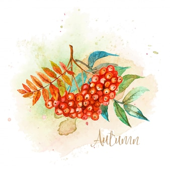 Herbstaquarellpostkarte mit einem zweig der eberesche