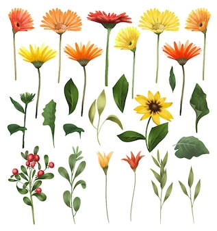 Herbstastern und gerberblumen isolierte grüne blätter und zweige eingestellt Premium Vektoren