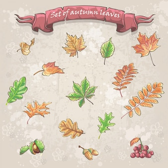 Herbstblätter, viburnum-beeren, kastanien und eicheln
