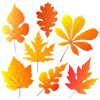 Herbstblätter von kastanien, eichen, johannisbeeren, maulbeeren, ahorn.