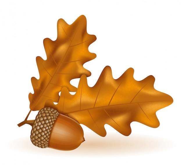 Herbsteicheneicheln mit blattvektorillustration
