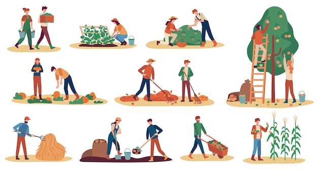 Herbsternte. landarbeiter sammeln reifes gemüse der ernte, pflücken obst und beeren, entfernen blätter, saison-landwirtschaftsvektorsatz. mann und frau graben kartoffeln, sammeln kürbis und mais