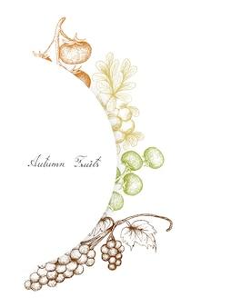 Herbstfrüchte von assyrtiko trauben
