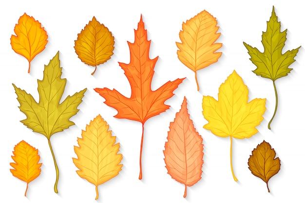 Herbstlaub gesetzt