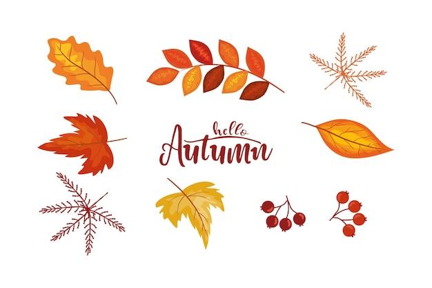 Herbstlaub und elementesammlung im flachen stil verschiedene blätter beeren