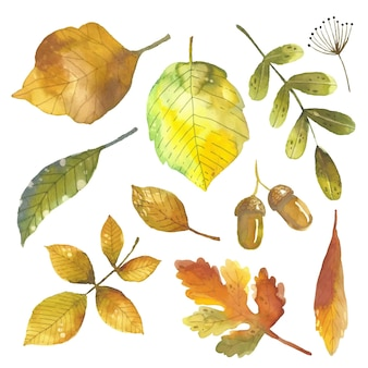 Herbstlaubsammlung