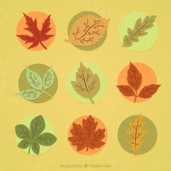 Herbstliche blätter illustration