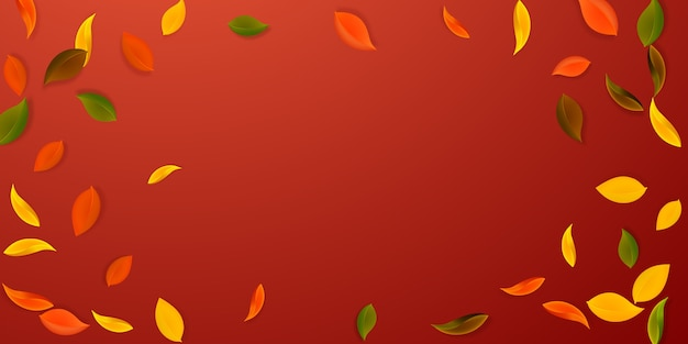 Herbstliches herbstlaub. rote, gelbe, grüne, braune ordentliche blätter fliegen. buntes laub der vignette auf herrlichem rotem hintergrund. wunderschöner schulverkauf.
