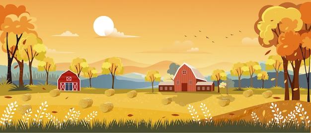 Herbstpanorama-landschaftsbauernhoffeld mit orangefarbenem himmel