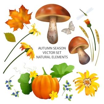 Herbstsaison-sammlung von herbstblättern und naturelementen auf weißem hintergrund