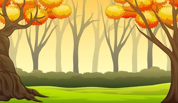Herbstwaldlandschaft mit kahlen bäumen