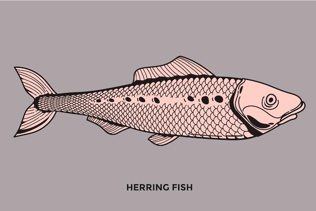 Heringsfisch-illustration mit optimiertem strich