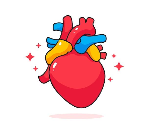 Herz menschliche anatomie biologie organ körpersystem gesundheitswesen und medizinische handgezeichnete cartoon-kunstillustration