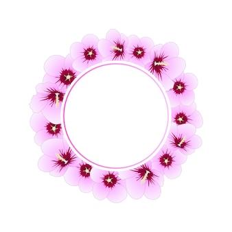 Hibiscus syriacus rose von sharon-fahnen-kranz
