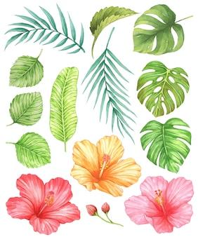 Hibiskus und tropische blätter aquarell
