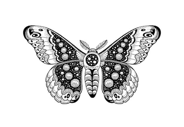 Himmlischer okkulter mond-skizzenentwurf der motten-tätowierung