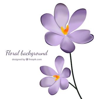 Hintergrund der hübschen lila blüten im realistischen stil