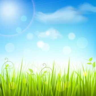 Hintergrund des blauen himmels des frühlingswiesengrases