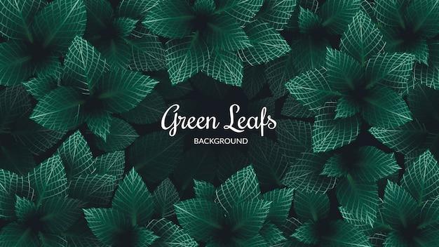 Hintergrund grüne blätter