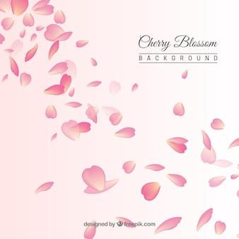 Hintergrund mit Kirschblütenblumenblättern