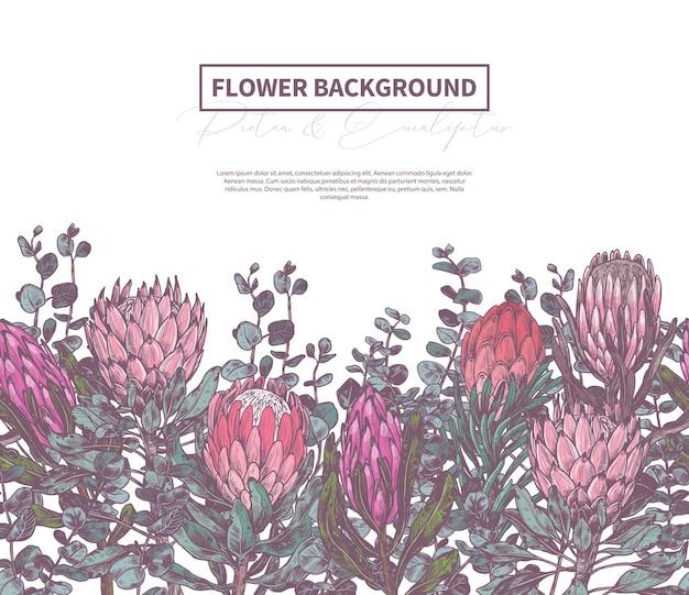 Hintergrund mit skizzenzeichnung von protea, botanische illustration