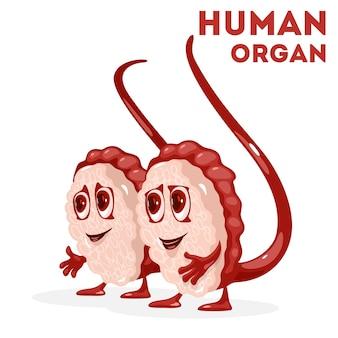 Hoden und hodensack des männlichen fortpflanzungssystems mit augen, mund, händen und beinen.