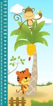 Höhenmesswand des lustigen affen auf bananenbaum mit tiger