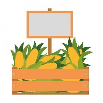 Holzkiste mit zuckermais isoliert symbol