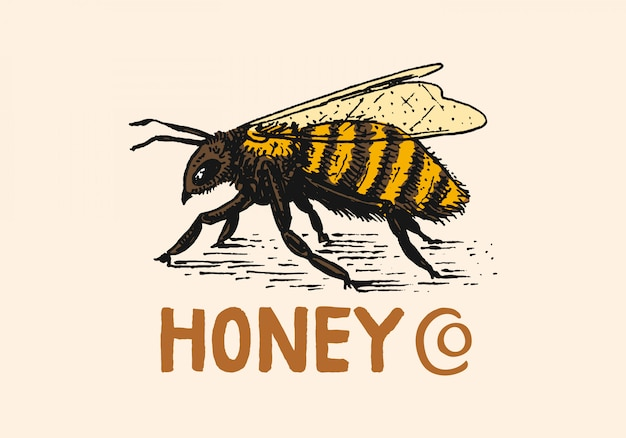 Honig und bienen. vintage logo für typografie, shop oder schilder.