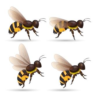 Honigbiene isoliert cartoon-set. tier der honigbiene auf weißem hintergrund.