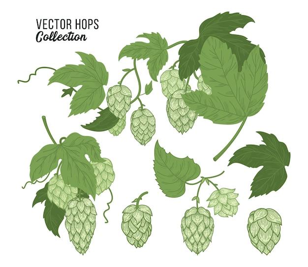 Hopfen setzt isolierte zusammensetzung. farbskizze der hopfenpflanze, hopfenbündel mit blättern und hopfenzapfen im gravurstil.