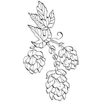 Hopfenpflanze, gravur vintage illustration