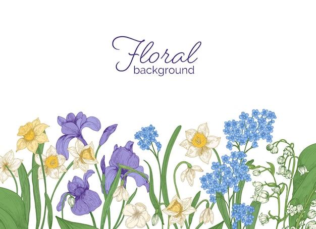 Horizontaler blumenhintergrund verziert mit frühlingswiese und blühenden waldblumen, die am unteren rand auf weißem hintergrund wachsen